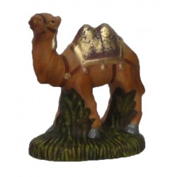 Camelo em pé